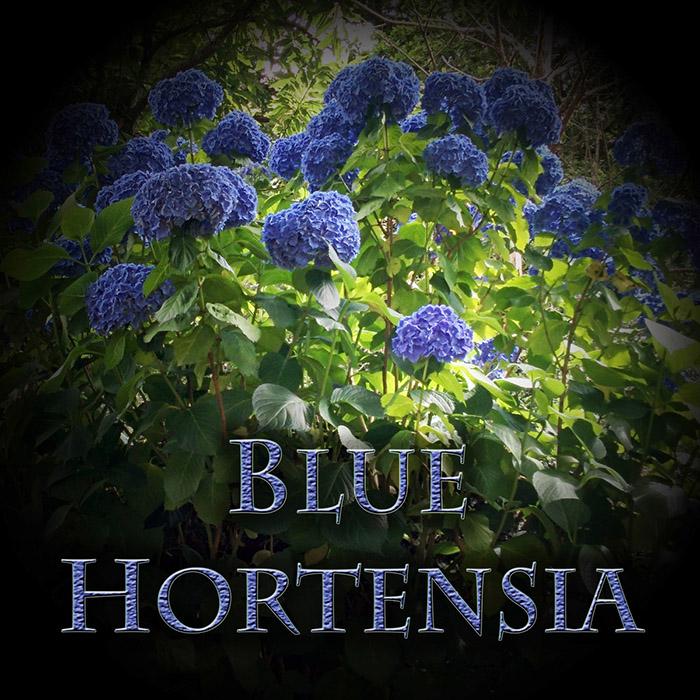 Blue hortensia Blue Hortensia